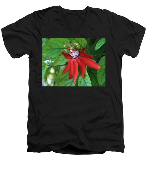 Red Passion Men's V-Neck T-Shirt by Marna Edwards Flavell