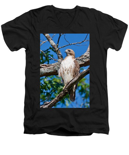 Red-tail Hawk 6813 Men's V-Neck T-Shirt