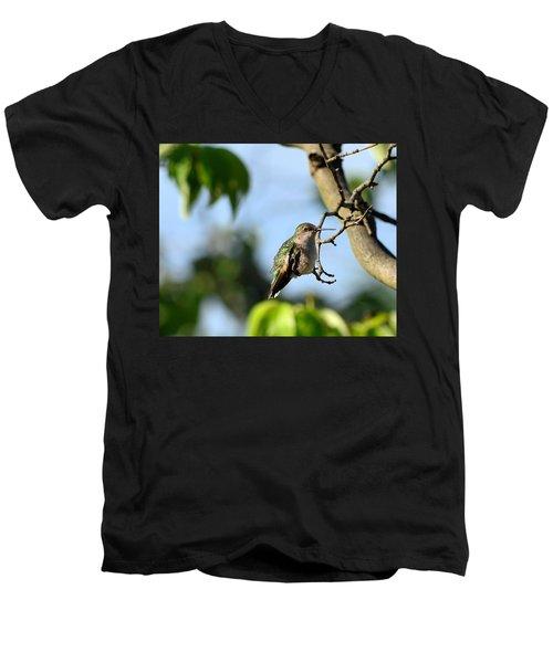Resting Hummingbird Men's V-Neck T-Shirt by Kathy Eickenberg