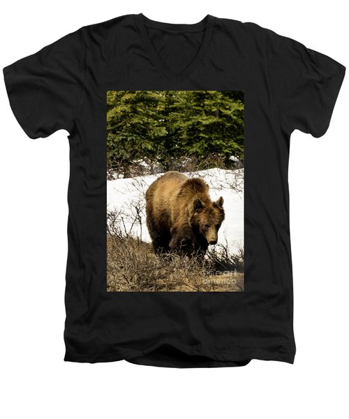 Rockies Grizzly Men's V-Neck T-Shirt