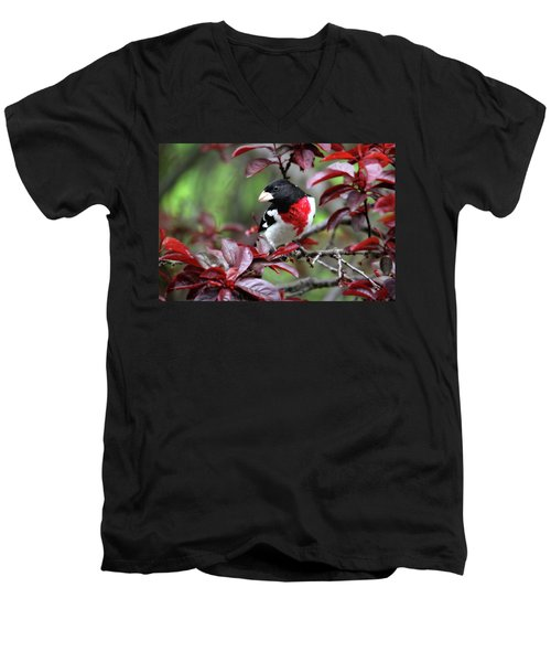 Rose-breasted Grosbeak Men's V-Neck T-Shirt