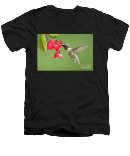 Men's V-Neck T-Shirt featuring the photograph Ruby Throated Hummingbird Feeding On Begonia by Bonnie Barry