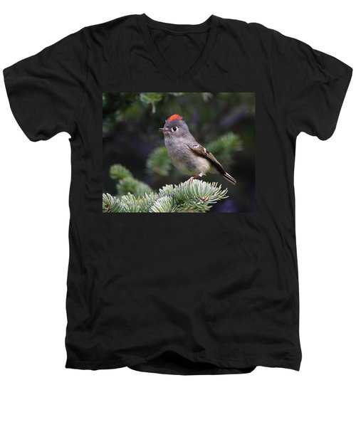 Rubycrowned Kinglet Men's V-Neck T-Shirt