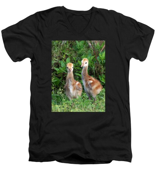 Sandhill Crane Chicks Men's V-Neck T-Shirt
