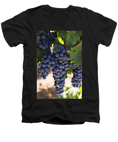 Sauvignon Grapes Men's V-Neck T-Shirt