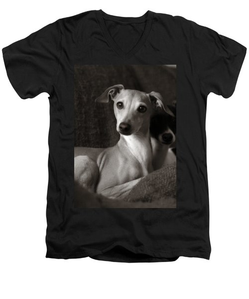Say What Italian Greyhound Men's V-Neck T-Shirt