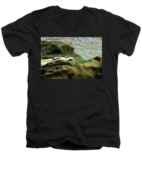 Men's V-Neck T-Shirt featuring the photograph Seal On The Rocks by Anthony Jones