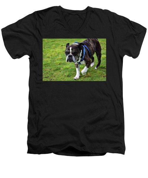 Leroy The Senior Bulldog Men's V-Neck T-Shirt
