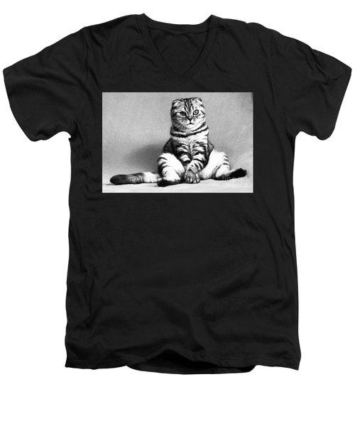 Shy Cat Men's V-Neck T-Shirt