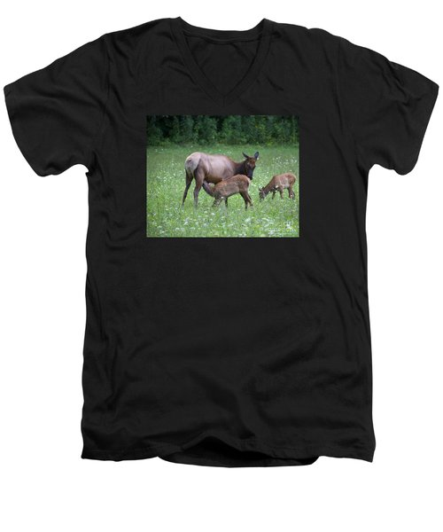 Smoky Mountain National Park Elk Cow Nursing Calf Men's V-Neck T-Shirt
