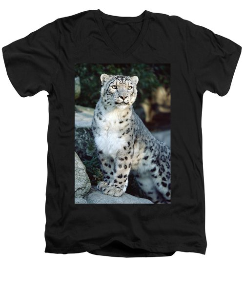 Snow Leopard Uncia Uncia Portrait Men's V-Neck T-Shirt