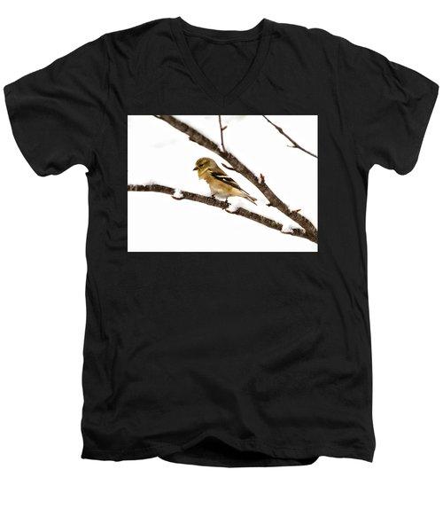 Snowy Day Goldfinch Men's V-Neck T-Shirt