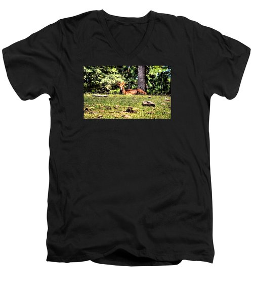 Stag In The Woods Men's V-Neck T-Shirt by James Potts