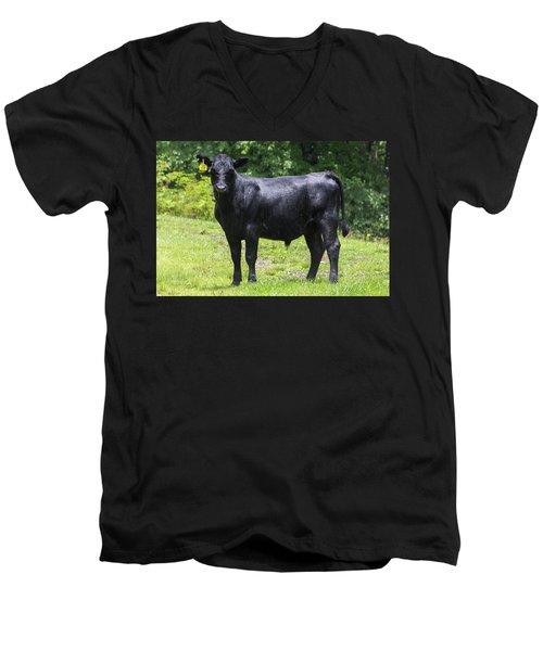Staring Steer Men's V-Neck T-Shirt