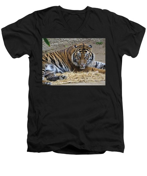 Staring Tiger Also Men's V-Neck T-Shirt