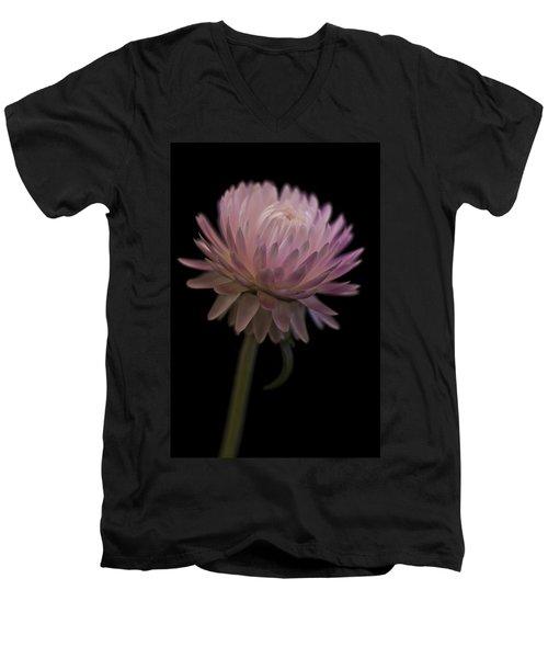 Straw Flower Men's V-Neck T-Shirt by Sandra Foster