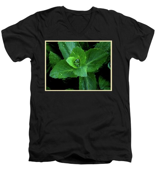 Succulent After The Rain  Men's V-Neck T-Shirt