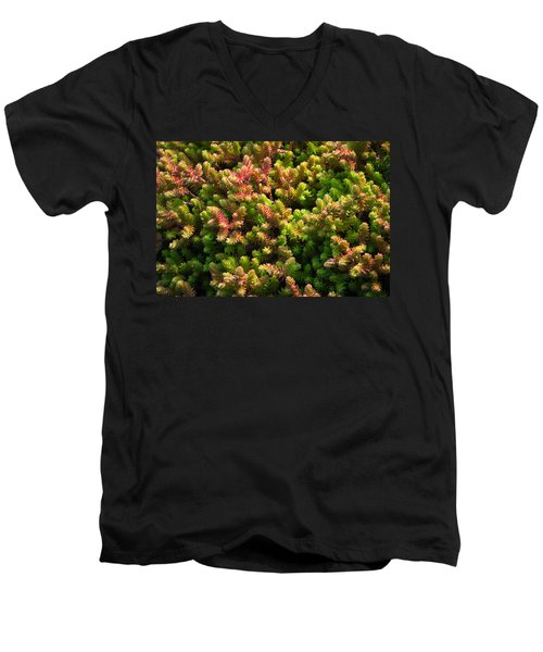 Men's V-Neck T-Shirt featuring the photograph Succulents by Catherine Lau