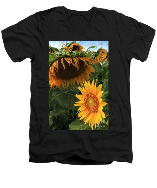 Sun Flowers  Past  And  Present  Men's V-Neck T-Shirt