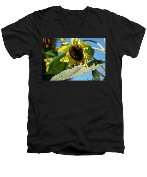 Sunflower, Lemon Queen, With Pollen Men's V-Neck T-Shirt