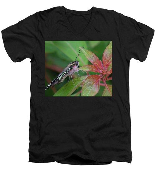 Tailed Jay Butterfly Macro Shot Men's V-Neck T-Shirt