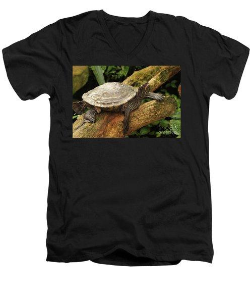 Tess The Map Turtle #3 Men's V-Neck T-Shirt