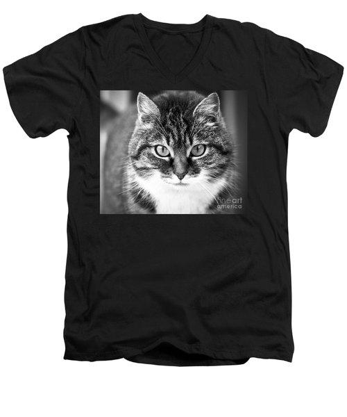 The Cat Stare Down Men's V-Neck T-Shirt