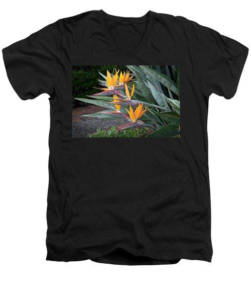 The Crane Flower - Bird Of Paradise  Men's V-Neck T-Shirt