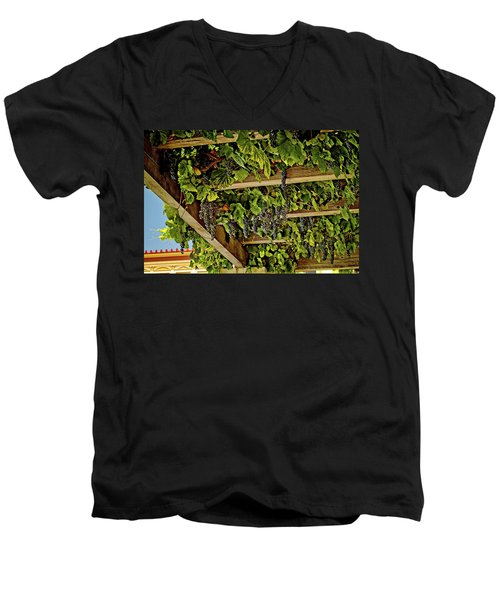 The Hanging Grapes Men's V-Neck T-Shirt