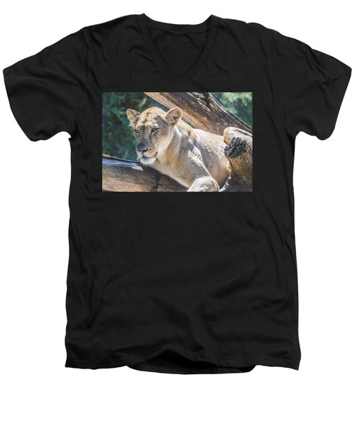 The Lioness Men's V-Neck T-Shirt by David Collins