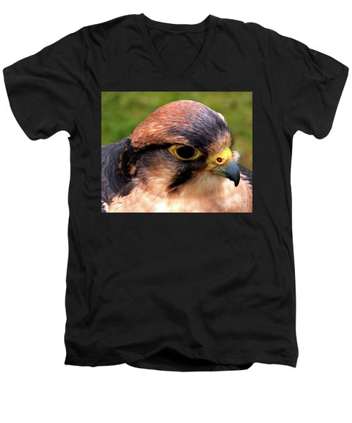 The Peregrine Men's V-Neck T-Shirt by Stephen Melia