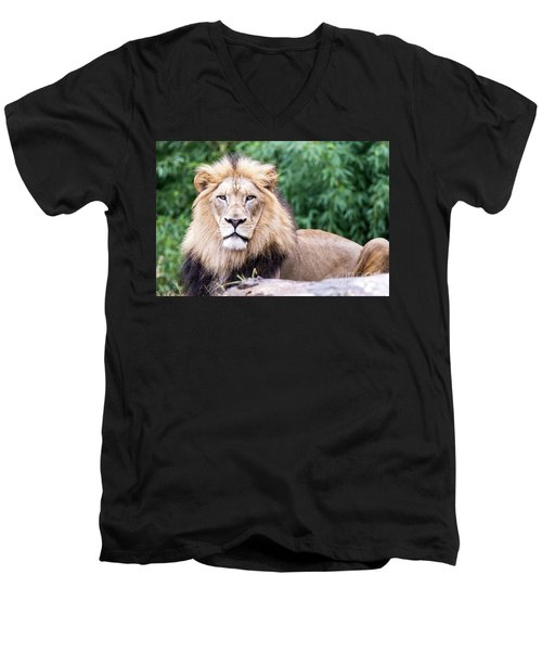 The Stare Down Men's V-Neck T-Shirt