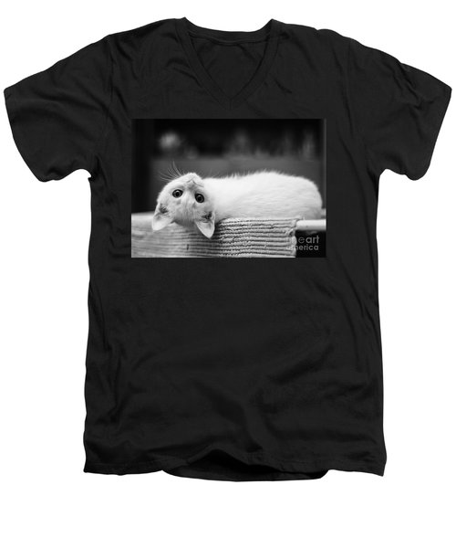 The White Kitten Men's V-Neck T-Shirt