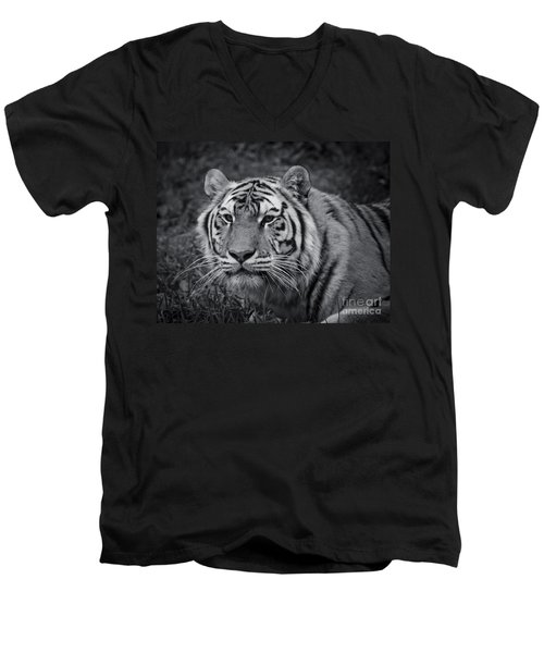 Tiger In The Grass Men's V-Neck T-Shirt by Darcy Michaelchuk
