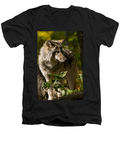Men's V-Neck T-Shirt featuring the photograph Timber Wolf by Michael Cummings
