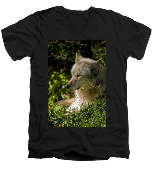 Men's V-Neck T-Shirt featuring the photograph Timber Wolf Portrait by Michael Cummings