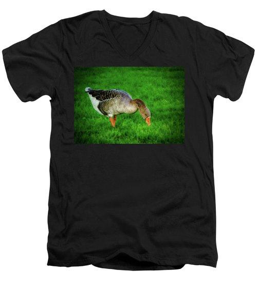 Toulouse Goose  Men's V-Neck T-Shirt