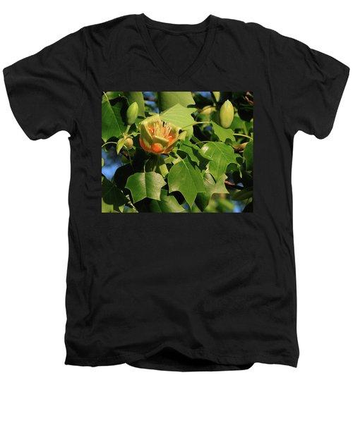 Tulip Poplar Men's V-Neck T-Shirt