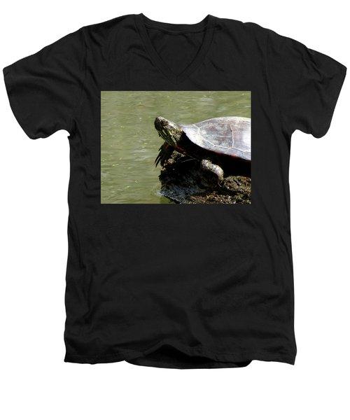 Turtle Bask Men's V-Neck T-Shirt