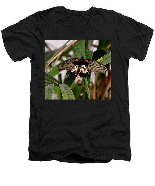 Vibrant Butterfly Men's V-Neck T-Shirt