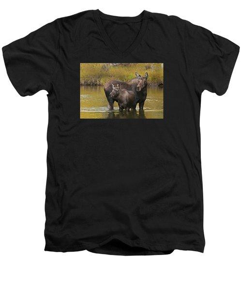 Watchful Moose Men's V-Neck T-Shirt by Gary Lengyel