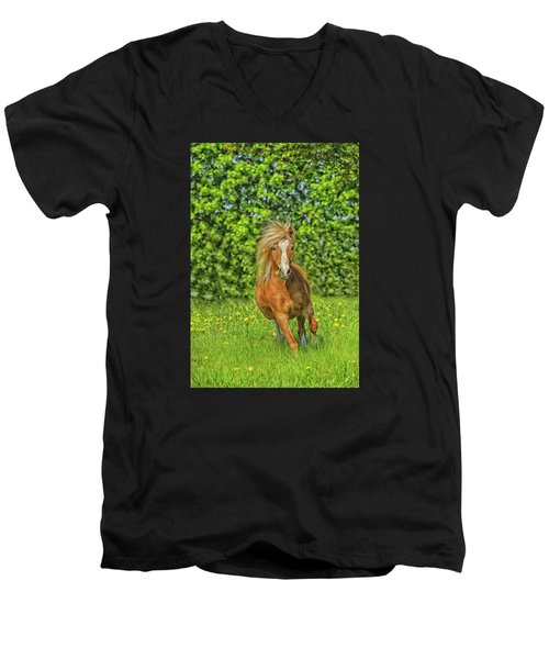 Welsh Pony Men's V-Neck T-Shirt