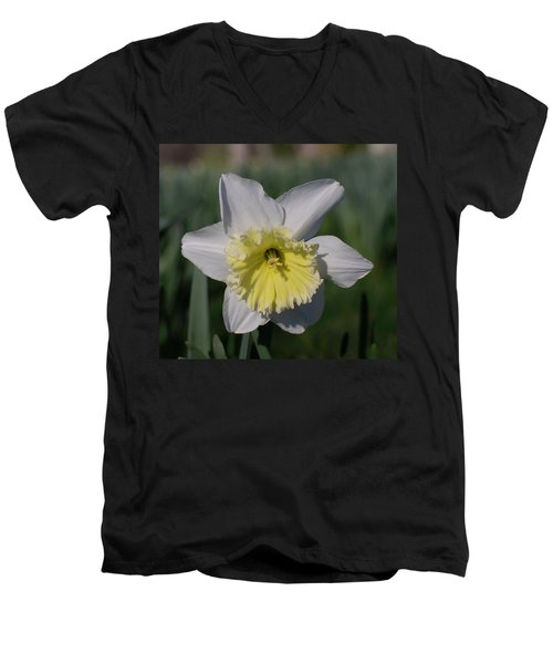 White And Yellow Daffodil Men's V-Neck T-Shirt