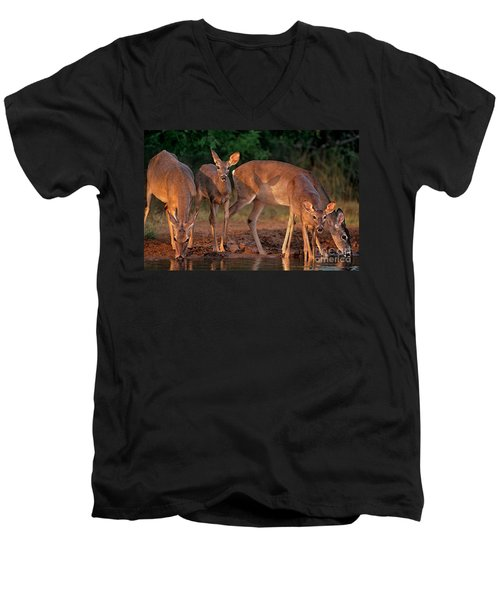 Men's V-Neck T-Shirt featuring the photograph Whitetail Deer At Waterhole Texas by Dave Welling