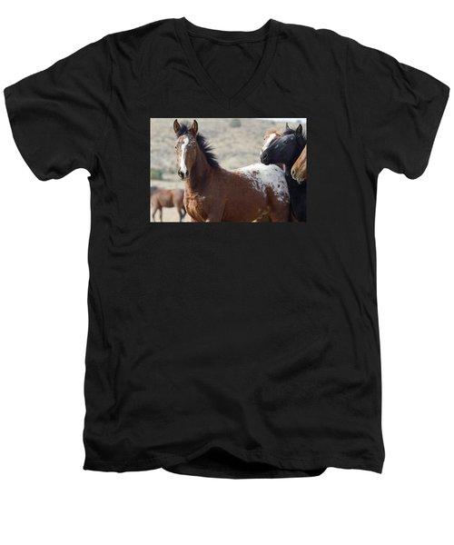 Wild Appaloosa Mustang Horse Men's V-Neck T-Shirt