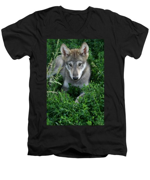 Men's V-Neck T-Shirt featuring the photograph Wolf Pup Portrait by Shari Jardina