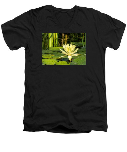 Yellow Water Lily Men's V-Neck T-Shirt