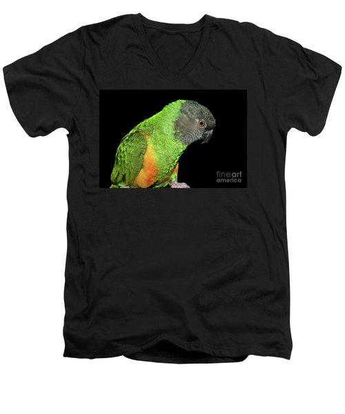 Senegal Parrot Men's V-Neck T-Shirt