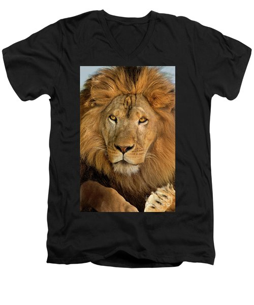 656250006 African Lion Panthera Leo Wildlife Rescue Men's V-Neck T-Shirt