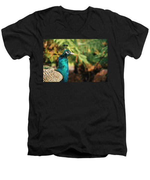 Beautiful Colourful Peacock Outdoors In The Daytime. Men's V-Neck T-Shirt